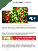 How to Make Sweet Profits From Chilli Farming - Biashara Leo Digital