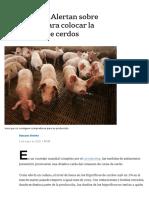 Coronavirus. Alertan sobre problemas para colocar la producción de cerdos