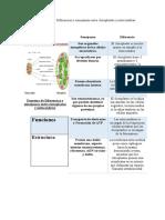Esquema de Diferencias y semejanzas entre cloroplastos y mitocondrias