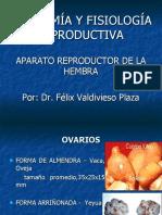 Anatomía y Fisiología Reproductiva de la hembra