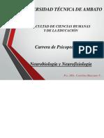 NByNF.1 (1).pdf
