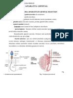 9.05-Aparatul-genital.doc