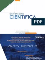 6. PRACTICA 6 - INTESTINO DELGADO Y GRUESO