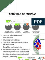 LAB 4. ACTIVIDAD DE ENZIMAS