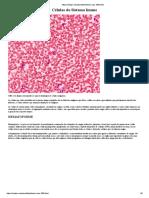 Hematologia - Compilado de Textos