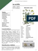 Chamaemelum nobile - Manzanilla