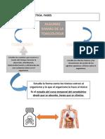 FASES DE LA TOXICOCINETICA ANTE LA PRESENCIA DE UN XENOBIOTICO O SUSTANCIA EN EL CUERPO