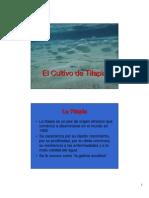 07 - El Cultivo de Tilapia (1)