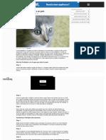 www_ehowenespanol_com_darle-pedialyte-gato-como_128113_