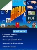BRUCELLA 2