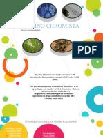 Chromistas.pptx