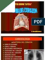 CARDIOLOGIA anatomia