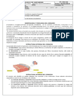 GUIA N° 15  MORFOLOGIA Y FISIOLOGIA DEL CORAZON HUMANO BIOLOGIA SEPTIMO 2020