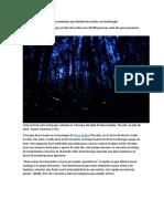 El bosque mexicano que ilumina las noches con luciérnagas