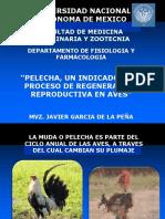 MUDA. fisiología de los procesos productivos
