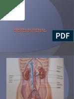 Sistema renal usm