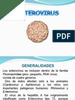 HEPATOVIRUS-Y-ENTEROVIRUS
