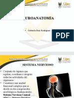 Neuroanatomia.pptx