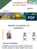 aparato circulatorio-CIRCULATORIO-los-pepas prestado.pptx