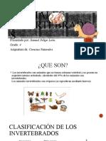 Exposicion Animales invertebrados