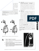 Mecánica respiratoria  hematosis