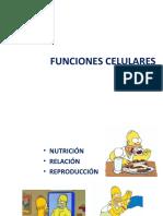 tema7-lasfuncionescelulareseat-140331142314-phpapp02