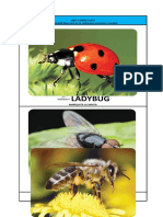 UNIT 4 INSECT LIFE FLASHCARD