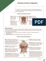 C9_sistema_urinario_digestivo