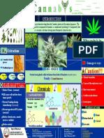 cannabis____FINAL