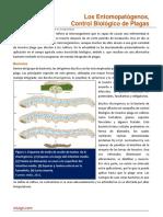 Los Entomopatogenos Control Biologico de Plagas