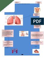 infograma de pulmones