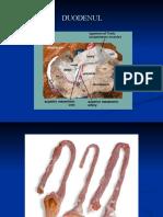Intestinul-subtire-si-intestin-gros-1