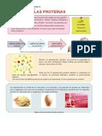 Las-Proteínas