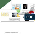 Los factores que modifican e intervienen la rapidez de una reacción (1)