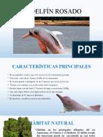 el delfín rosado.pptx