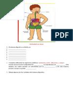 Actividad en clase biologia tema sistema digestivo (1)