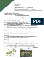 guia 5 texto informativo de la Mantis religiosa