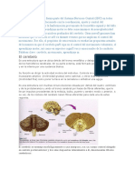 NEUROFISIOLOGIA  DE CEREBELO