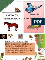 animales vertebrados 2 basico.pdf