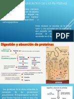 proteinass.pptx