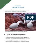 ESPERMATOGÉNESIS  MATERIAL DE APOYO (1)