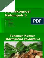 Kel 3 Farmakognosi Kencur (1)