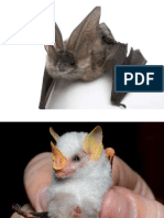 Fotos murciélagos