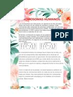 En-los-seres-humanos-y-en-la-mayoría-de-otros-organismos-con-reproducción-sexual (1)