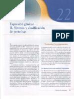 Capitulo XXII, Expresión génica II. Síntesis y clasificación de proteínas.