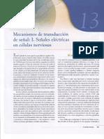 Capitulo XIII Mecanismo de Transducción  de Señal I Señales Eléctricas en Células Nerviosas