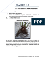 microbiologia n-5