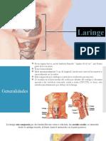 laringe y arbol bronquial.pptx