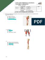 Taller Musculos Consolidado