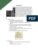 Tarea de micro 2(Mycoderma).docx